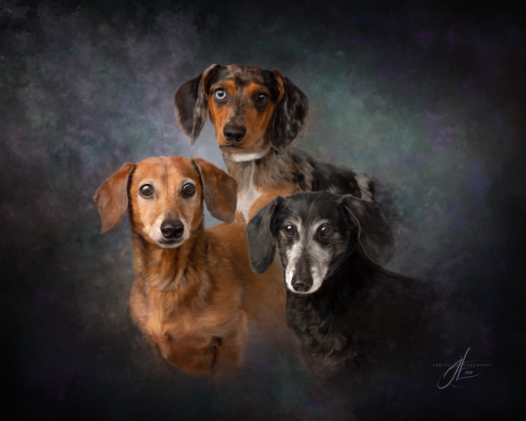 Dachshund Trio Painting