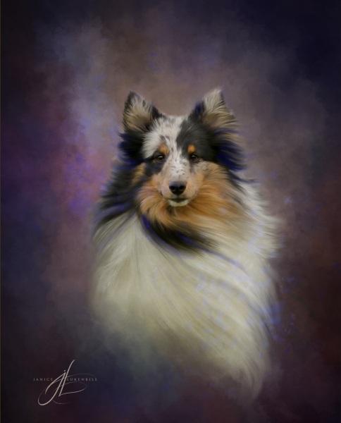 Shetland Sheepdog painting