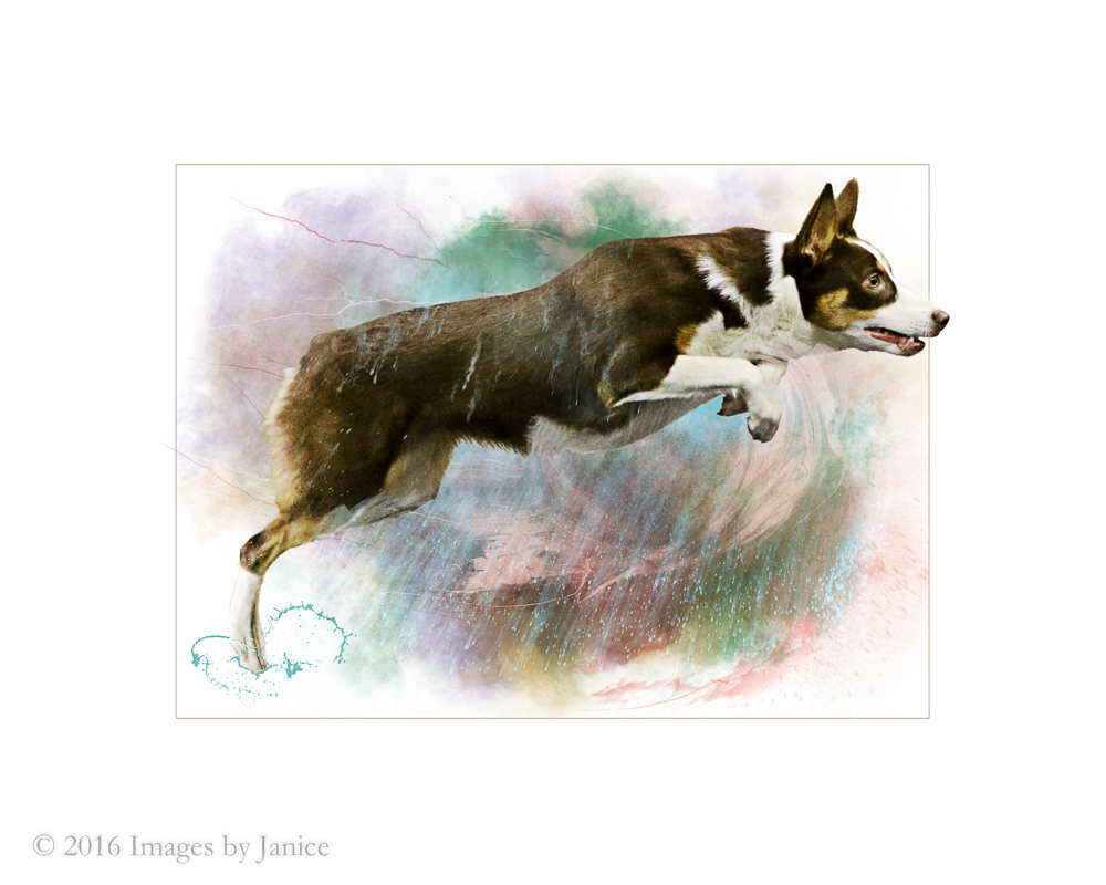 Dog Photos – Made into Artwork