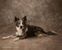 A Family Affair – Pet Photography Style